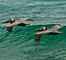 Pelicans In Flight by KOKOPEDAL
