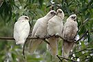 The Birdie Bunch  by yolanda