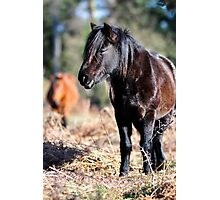 Wild at heart Photographic Print