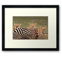 Lion with kill Framed Print