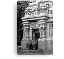 Elephant Butt Metal Print
