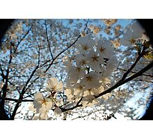 Spring Time is Near Photographic Print
