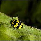 lady bug by Helenvandy