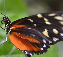 Butterfly at the Pacific Science Center in Seattle by Kate Farkas