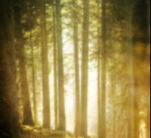light in the woods  by kittenmomo
