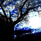 Darkened Silhouette  by Rayna Harmon