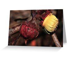 Eucalyptus youngiana Greeting Card