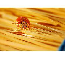 Bug On A Broom Photographic Print