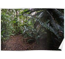 Cycad Grove - mount Tamborine Poster