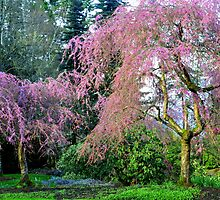 Pretty in Pink - Van Dusen Botanical Gardens by Kathryn  Young