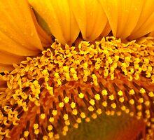 Floral Florets by Mari-Anna  Reiljan-Dillon