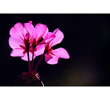 embracing autumn with open petals Photographic Print
