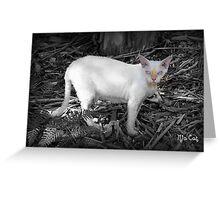 Mia Cat Greeting Card