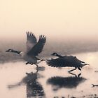 Run for life by THHoang