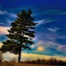 Pine Sentinel_1 by sundawg7