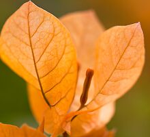 Golden Leaves by Hege Nolan