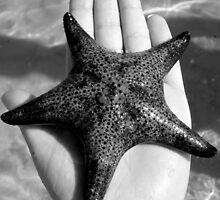 Starfish.  by Of Land & Ocean - Samantha Goode