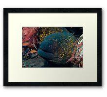 Moray Framed Print