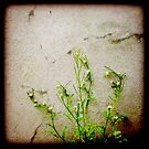Love Weed by © Jolie  Buchanan
