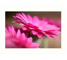pink gerberas Art Print