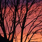 RED SUNSET  SKY by Marie Brown ©