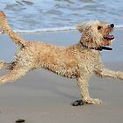 Shaggy the dog on the beach by Vicki73