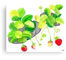 Sketch 18 ... Strawberries Canvas Print