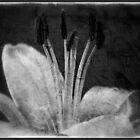Imprinted by Julesrules