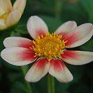 rose brossé by Natalie Cooper