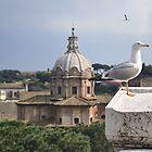 Bird over Rome by j0sh