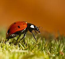 lady bug by janko