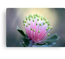 WA Wildflowers Canvas Print