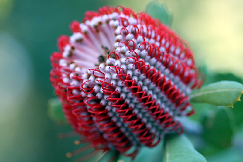 WA Wildflowers by EnviroKey