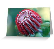 WA Wildflowers Greeting Card