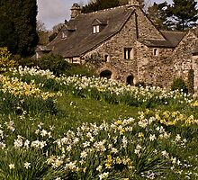 Spring at Cotehele by moor2sea