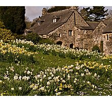 Spring at Cotehele Photographic Print