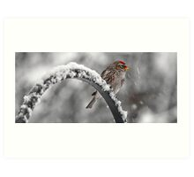 A Red Poll -- Waiting Out The Storm Art Print
