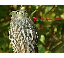 It's an owl Photographic Print