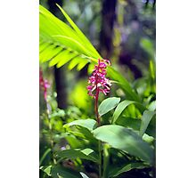 Tropical Flower in Puerto Rico Rainforest Photographic Print