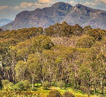 Mountain High - Mount Sterling , Victorian Alps - The HDR Experience by Philip Johnson