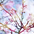 Bokeh Blossom #2 by Claire Elford