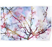 Bokeh Blossom #2 Poster