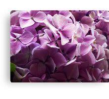 Hydrangea of Purple Canvas Print