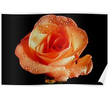 Mothers Day Rose. Poster