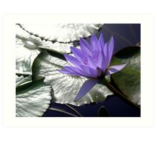 Lights and Shadows on Purple Art Print