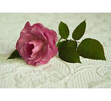 Old fashioned rose Photographic Print