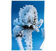 Frosted Teasel Poster