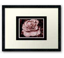 Pretty Camellia Framed Print