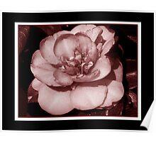 Pretty Camellia Poster