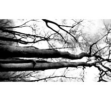 One Haunted Walk through the Woods Photographic Print